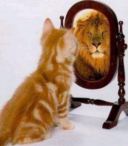 cat_vs_lion
